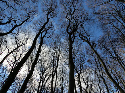 image of a forest silhouetted against the sky