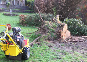 image of a yellow machine taking down a tree stump