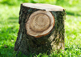 image of a tree stump in a grassy field